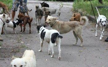 Свердловский Минфин уличил тагильских чиновников в оплате «отлова» мёртвых собак
