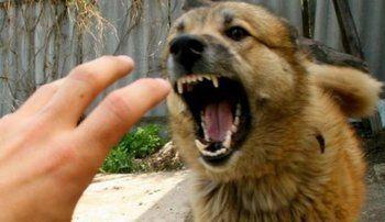 Как спастись от стаи бродячих собак: советы кинолога-полицейского