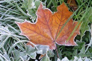 В Нижнем Тагиле продлено экстренное предупреждение из-за заморозков