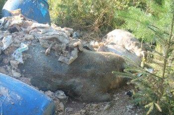 Международным соревнованиям подложили свинью
