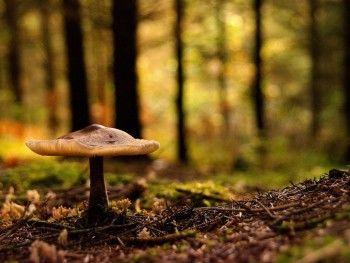 Заблудившихся грибников нашли!