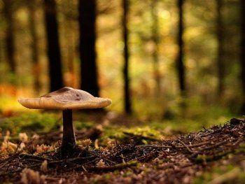 Найдены первые следы пропавших грибников