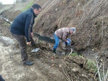 Россельхознадзор: Ущерб от химического загрязнения почвы свинокомплексом «Горноуральский» оценивается в миллионы рублей