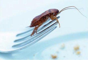 Тараканы в мясном цехе