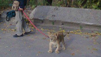 В городе Энгельс подростка на улице покусал лев