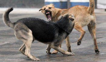 Свердловчанам, собаки которых загрызли семилетнюю девочку, предъявлено обвинение
