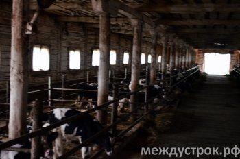 Работники Кайгородской фермы пожаловались в прокуратуру на угрозы руководства после публикации АН «Между строк»
