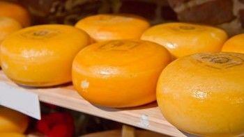 Полиция изъяла 470 тонн санкционного сыра