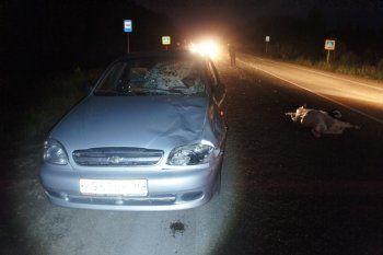 Водитель иномарки, сбившей семейную пару под Нижним Тагилом, была ослеплена встречной машиной