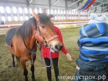 Дети, девушки и лошадь