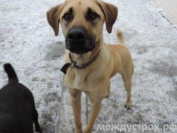 Администрация Нижнего Тагила готова потратить 3 миллиона рублей на решение проблемы с беспризорными собаками