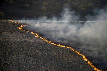Пожарные тушат крупный лесной пожар под Чернобылем (ФОТО)