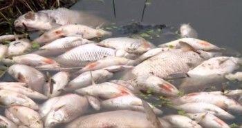 Под Екатеринбургом массово гибнет рыба