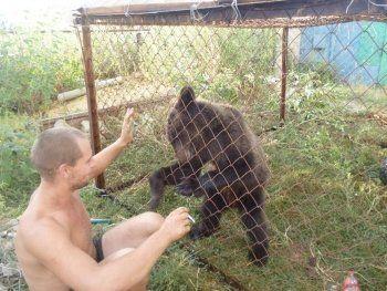 Медведь на «Волге» ехал в зоопарк под Нижним Тагилом (ВИДЕО)