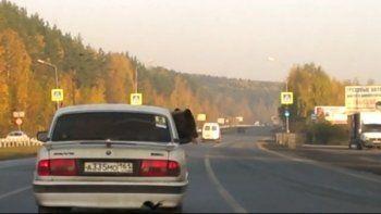 В Екатеринбурге на легковой машине везли медведя (ВИДЕО)