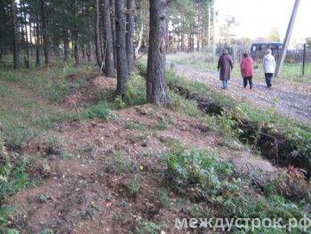 Жена главы посёлка под Нижним Тагилом собирается застроить вековой лес коттеджами. Местные жители попросили защиты у прокуратуры