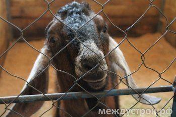 Защитники животных призвали к бойкоту новой программы Нижнетагильского цирка