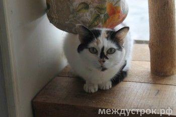 Кошачья инфекция вызывает отек мозга