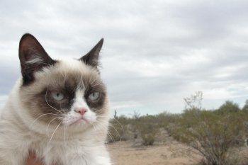На Урале массово умирают кошки