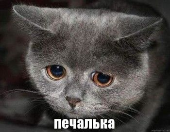 В России появятся подгузники «Печалька»