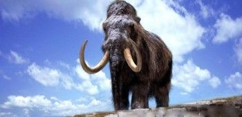 Российские учёные клонируют мамонта