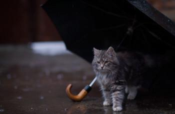 Синоптики предупреждают жителей Нижнего Тагила о сильных дождях