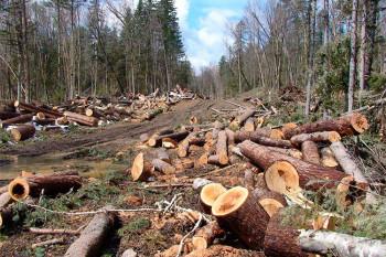 Трое граждан Азербайджана заплатят 5,5 млн рублей за незаконную вырубку леса под Нижним Тагилом