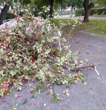 В Нижнем Тагиле на женщину с маленьким ребёнком упала тяжёлая ветка яблони