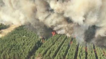 ВРостовской области из-за пожаров введён режим ЧС, засутки сгорело 450 гектаров леса