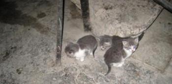 ВЕкатеринбурге коммунальщики заживо замуровали котят вподвале