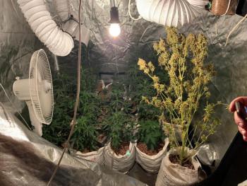 В Нижнем Тагиле пенсионер вырастил в квартире плантацию конопли
