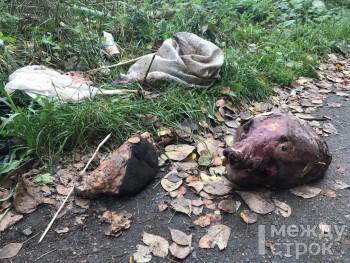 В Нижнем Тагиле нашли свежие останки медведя без шкуры
