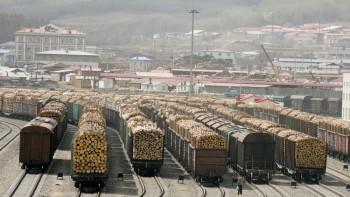 Путин поручил запретить экспорт необработанной древесины с 2022 года