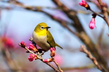 Музей-заповедник Нижнего Тагила отметит Международный день птиц