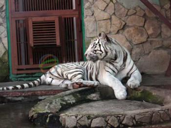 Минкультуры  разработало проект правил содержания животных в зоопарках и цирках