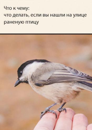 Что к чему: что делать, если вы нашли на улице раненую птицу