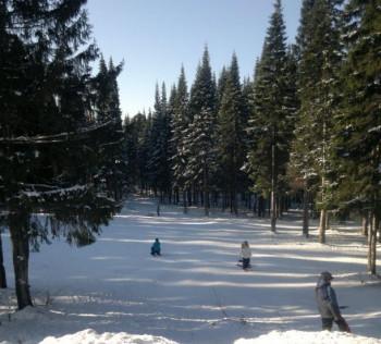 В Нижнем Тагиле на реконструкцию лесопарковой зоны «Пихтовые горы» потратят 150 млн рублей