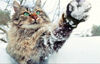 В выходные в Свердловской области похолодает до –20 градусов