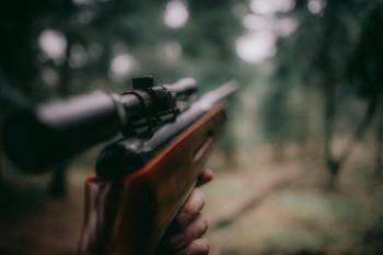 В Свердловской области изменятся правила охоты на диких животных
