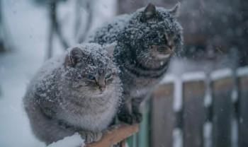 В Свердловскую область придут морозы до 25 градусов. В Нижнем Тагиле похолодает до минус 18