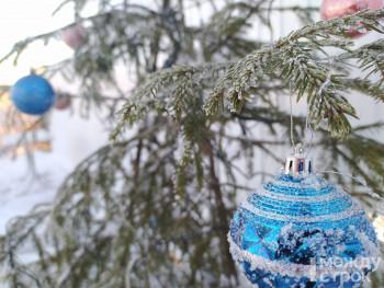 Тагильчане смогут срубить ели к Новому году, взяв разрешение у лесничества