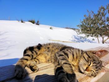 В выходные синоптики обещают жителям Нижнего Тагила солнечную погоду