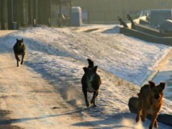 В Нижнем Тагиле нашли обглоданный собаками труп