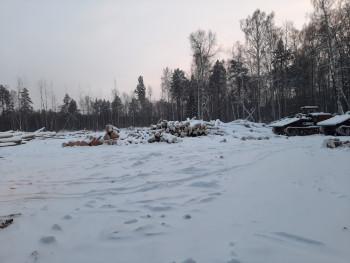 В селе под Нижним Тагилом выявили «чёрного» лесоруба