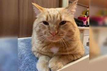 Зоозащитники написали заявление на жительницу Нижнего Тагила из-за того, что она усыпила бездомного кота