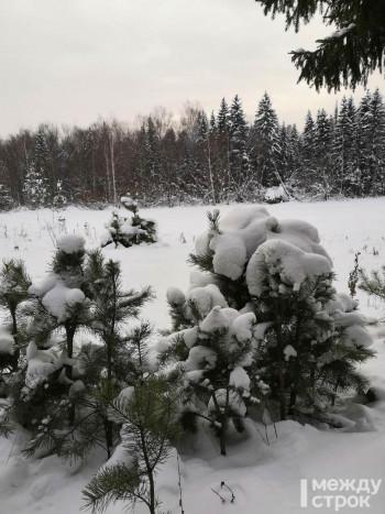 На территории Нижнетагильского лесничества фирма из Верхней Туры незаконно вырубила деревья