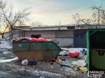 В Нижнем Тагиле снова не могут найти фирму, которая будет отлавливать бездомных собак