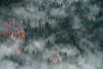 Города Свердловской области окутал смог от лесных пожаров