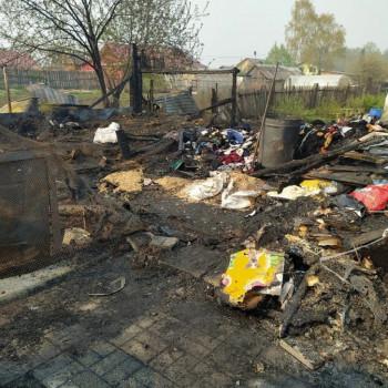 При пожаре в частном приюте в Билимбае погибло более 30 собак