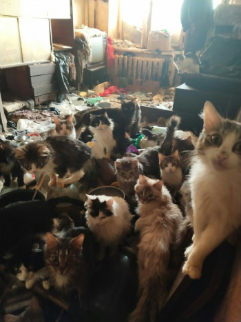 «Все до невозможности истощены». В Нижнем Тагиле нашли квартиру с 30 кошками